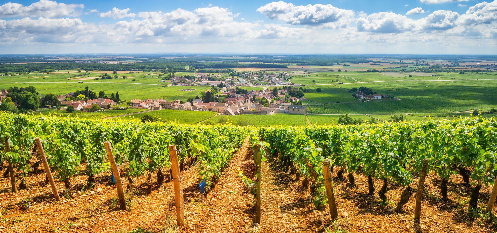 vignoble de la vallee du rhone